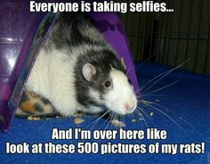 Rat truth-at least it keeps the feds thinking I'm crazy !