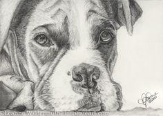 """Chaos"" Boxer Portrait (artwork by Leanne Wildermuth)"