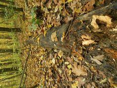 Fotó itt: erdei séta 2016. október 23. - Google Fotók