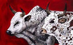 Red Nguni bull & cow