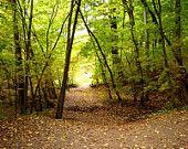 autumn stroll-nature photography