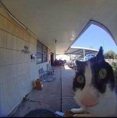 Cute Funny Animals, Cute Baby Animals, Animals And Pets, Cute Cats, Funny Cats, Stupid Cat, Stupid Funny Memes, Sad Cat, Mood Pics
