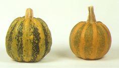 zucca americana cucurbita pepo