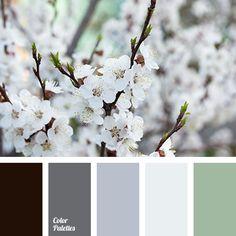Color Palette #3381