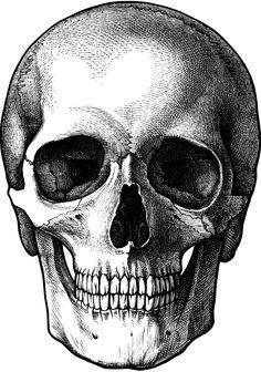 cerveau dessin noir et blanc - Recherche Google