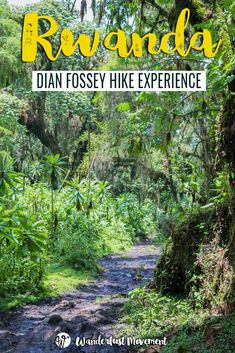 Everything You Need to Know about the Dian Fossey Hike in Rwanda | Wanderlust Movement
