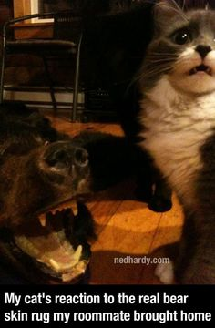 A Gallery Of Funny Animal Pictures | Ned Hardy