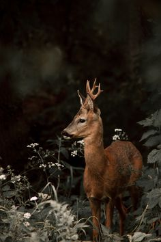A lost deer stops to consider its options. by Daniel O'Connell's Photos
