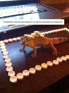 Now I want a gecko too...