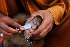A man shaves his monkey with a razor before it performs tricks for money in Lahore, Pakistan.