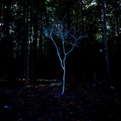 little blue tree (2006), barry underwood