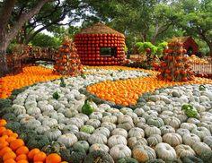 Dallas Arboretum and Botanical Gardens 2014