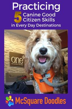 If you want to gauge whether or not your therapy dog in training will respond on cue, then exploring a variety of settings is a valuable use of your time. This practice will also offer you different opportunities to work on distinct skills to help your dog become a certified therapy dog. So where do you go? Read on... #CGC #CGCTraining #dogtrainingideas #DogFriendlyIdeas #McSquareDoodles