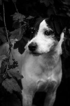 Black Dahlia by Andy Fialova