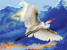 Willis_ReturntoRoost Art Competitions, Color Pencil Art, Pencil Drawings, Colored Pencils, Bird, Animals, Colouring Pencils, Animales, Animaux