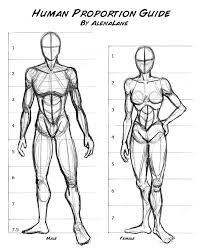 Image result for human anatomy drawing reference