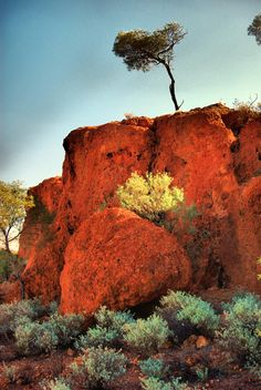 Tree on a Hill, Sandstone, Western Australia. Cool Countries, Countries Of The World, South Australia, Western Australia, Australia Kangaroo, Panoramic Photography, Australian Art, Landscape Pictures, Dream Vacations