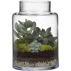 boris hurricane-terrarium // Crate and Barrel Glass Terrarium Containers, Cactus Y Suculentas, Terraria, Modern Glass, Glass Candle Holders, Vases Decor, Indoor Plants, Air Plants, Indoor Garden