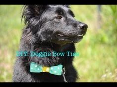 How to make a No Sew Dog Bow Tie... so easy!