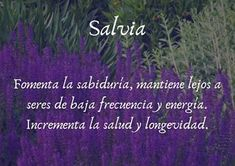 Hay más cosas en el cielo y en la Tierra ...: PLANTAS MÁGICAS Magic Herbs, Salvia, Kitchen Witch, Healing Herbs, Inner Peace, Herb Garden, Reiki, Give It To Me, Medicine