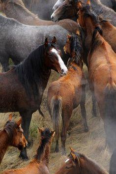 - Art Of Equitation