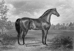 Sir Archy - Wikipedia