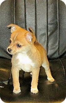 17 Best Puppy Love Images Puppy Love Doggies Puppies