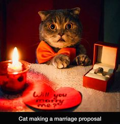 Cat making a...