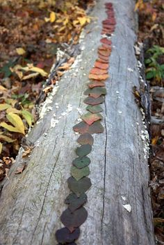 lil fish studios: Land Art With The Wee Ones (arranging leaves by color)