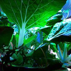 @sibeliusmuseum Harvest day! #plantuijungle #plantui #plantuismartgarden #sibbe #sibeliusmuseum #stiftelsenabo #såa Harvest Day, Smart Garden, Plant Leaves, How To Plan, Plants, Instagram, Plant, Planets
