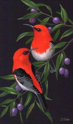 Pinturas a la venta. Pinturas a la venta. Exotic Birds, Colorful Birds, Pretty Birds, Beautiful Birds, Beautiful Pictures, Art En Ligne, Bird Drawings, Little Birds, Bird Prints