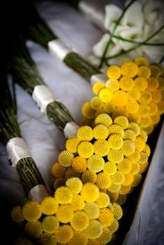 Bright yellow Craspedia (also known as Billy Balls) are often used to fill in bouquets and add pops of color - but they also look fantastic grouped together alone for bouquets, as shown here. Shop Craspedia for the most part year-round at GrowersBox.com!