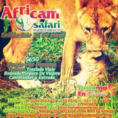 #africamsafari te espera este 25 de mayo http://www.turismoenveracruz.com.mx/africamsafari.htm