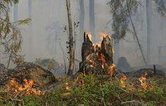Reacendimento na Covilhã exige intervenção de 400 bombeiros - Um reacendimento no incêndio que começou no sábado, na Covilhã, distrito de Castelo Branco, e que estava já dominado desde domingo, estava a obrigar, às 16 horas de hoje, à intervenção de mais de 400 bombeiros.