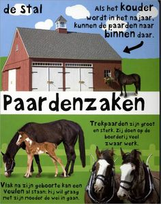 Paarden Pony, Spring, Animals, Projects, Animales, Animaux, Ponies, Animal, Animais