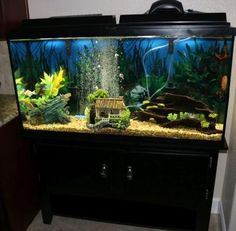 1000 images about tropical fish on pinterest for 60 gallon fish tank