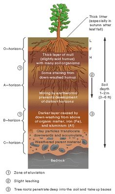 Layers of soil worksheet google search geology for Soil 6th grade science