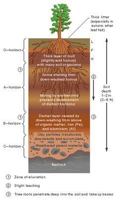 Earth Science Soil Profile