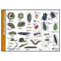 Diy Nature, Nature Crafts, Pablo Picasso, Moleskine, Pond Dipping, Journal Vintage, Doodles, Nature Journal, Fauna
