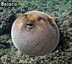 criaturas estranhas do mar - Pesquisa Google