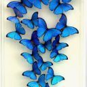 Top 14 Most Beautiful Butterflies in the World [Amazing Colors & Shapes] : Butterflies are one of a lot of varied as well as attractive insects worldwide. The huge team of butterflies consist of greater than 250000 flavors. tag: most beautiful butterflies Beautiful Butterfly Images, Butterfly Photos, Butterfly Kisses, Butterfly Art, Blue Butterfly Wallpaper, Morpho Butterfly, Butterfly Tattoos, Blue Morpho, Morpho Bleu