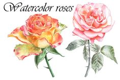 Watercolor roses by rednex on @creativemarket