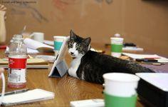 회의실 고양이 :D