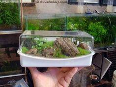 micro aquarium - Bing Images