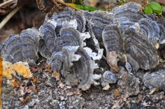 A close-up of fungus growing on a dead log