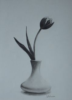 Tulip in a vase, still life sketch. Original art, graphite pencil drawing by Elena Whitman.
