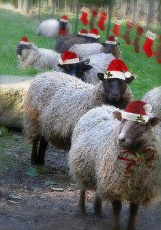 Christmas sheep wishing EWE a Merry Christmas! Primitive Christmas, Noel Christmas, Christmas Animals, Country Christmas, Christmas Humor, All Things Christmas, Christmas Pets, Irish Christmas, Tartan Christmas
