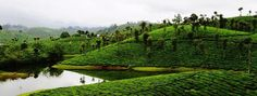 Valparai is a mesmerizing hill station in Tamil Nadu