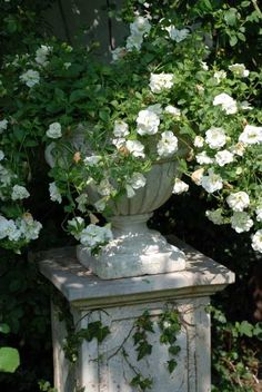 love the climbing white roses in an urn on the plinth for the garden