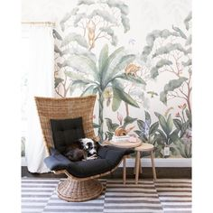 Lulu and Georgia jungle wallpaper and wicker chair from Perigold